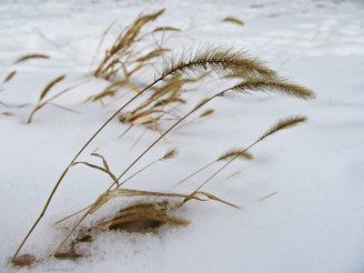 wind in the white