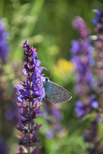 stillness and... blue