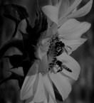 honey collectors