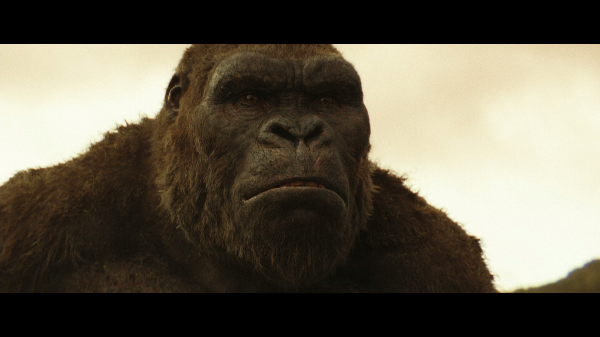 Kong Skull Island Movie 4k