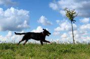 Mój pies Bari. Zdjęcie zmojegoarchiwum
