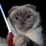 Kot rasowy. Zdjęcie zmojegoarchiwum