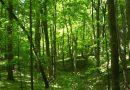 Mężczyzna sam zasadził okazały las