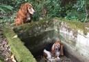 Pies nie opuścił przyjaciela w potrzebie. Czekali razem na pomoc przez 7 dni.