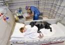 Wierny przyjaciel nie opuszcza chorego na autyzm chłopca na krok, nawet podczas pobytu w szpitalu