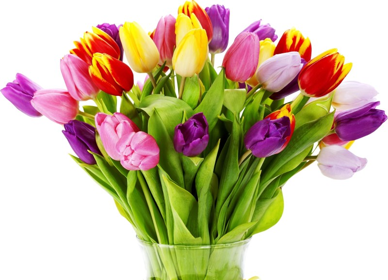 Tulips-Flowers-Bouquet-Bright-Vase-White-Background