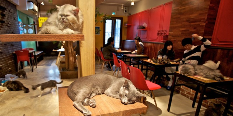 o-CAT-CAFE-MONTREAL-facebook