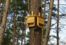 Leśnicy instalują budki dla nietoperzy