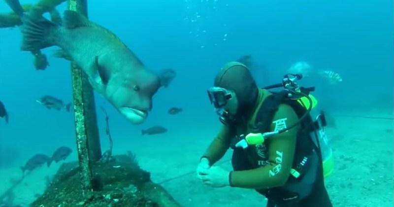 diver-fish-friends-hh5