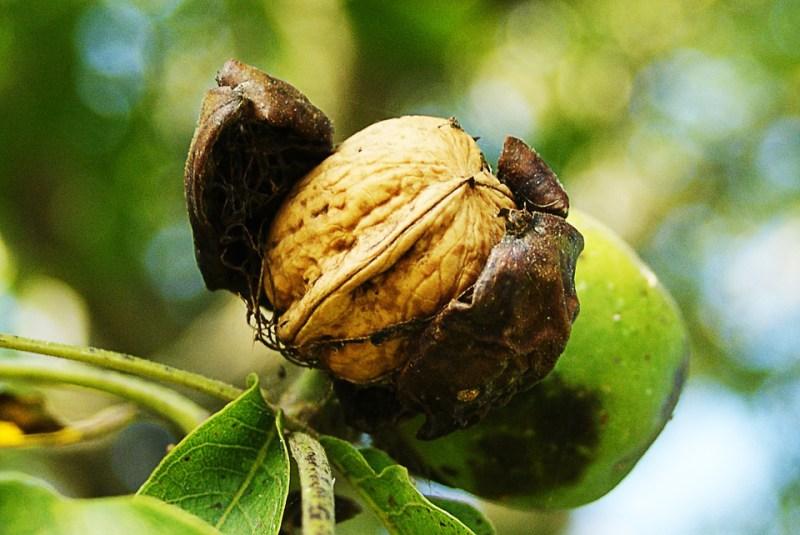 nuts-452150_960_720
