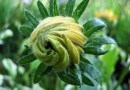 Znaleziono sposób na odczytanie i przetłumaczenie języka roślin