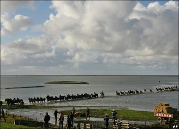 uwiezione-konie-na-wyspie6