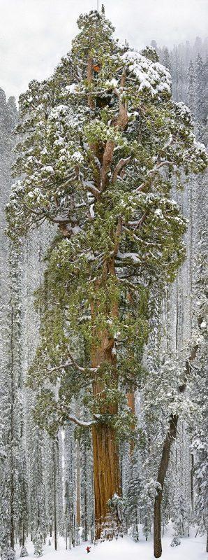 ogromne-drzewo-7