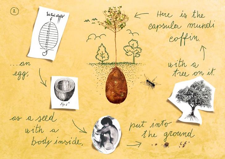 capsula-mundi-diagram