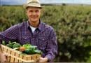 Od stycznia rolnicy mogą bez przeszkód sprzedawać własną żywność