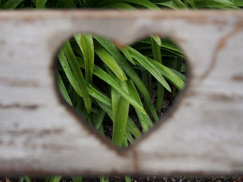 love-1333508_960_720