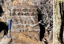 Przełomowe odkrycie polskich paleontologów. O miliard lat przesunęli jeden z największych wynalazków ewolucji!