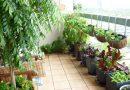Warzywa na balkonie – twórcy ogrodów zachęcają, by tej wiosny poeksperymentować