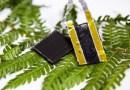 Przełomowy system przechowywania energii zainspirowany liśćmi paproci
