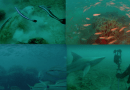"""Podwodny las zachwycił badaczy. Wygląda jak z """"Władcy Pierścieni"""""""