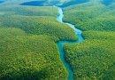 W Amazonii zostanie posadzone 73 miliony drzew. To największe zalesianie w historii planety!