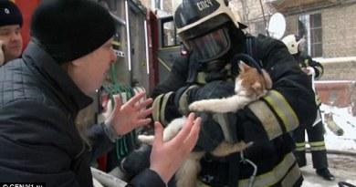 Nieprzytomny kot uratowany przez strażaków z płonącego budynku