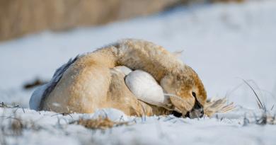 Pogodzony z losem czekał na śmierć … uratował go miłośnik ptaków