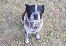 Ten pies przez 15 godzin chronił zaginioną w lesie, 3-letnią dziewczynkę