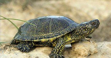 Dziś światowy dzień żółwia. Dlaczego czasem warto warto wziąć przykład z tych niezwykłych zwierząt i zwolnić tempo?