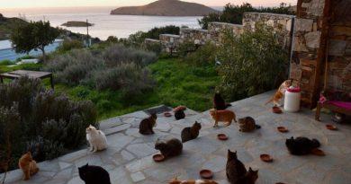 Pół roku w willi z kotami nad morzem w Grecji. Artystka szuka odpowiedzialnego opiekuna do pracy