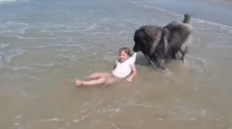 Pies postanowił uratować małą dziewczynkę