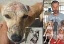 Oddał wszystko, by ratować psy porzucane na wysypiskach