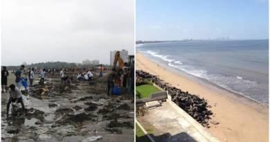 To była najbrudniejsza plaża w Indiach. Teraz znów mieszkają na niej żółwie zagrożone wyginięciem