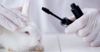 Kalifornia zakazuje kosmetyków testowanych na zwierzętach