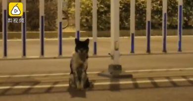 Wierny pies od ponad 80 dni czeka na swoją zmarłą panią