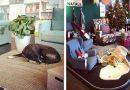 W Katanii na Sycylii IKEA otwiera drzwi dla bezdomnych psów