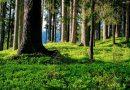 Nowa Zelandia chce posadzić milliard drzew, żeby walczyć ze zmianami klimatu