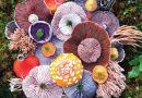 Naukowcy chcą opatentować zastosowanie jednego z grzybów z Puszczy Białowieskiej w walce z rakiem