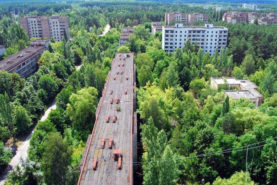 Katastrofa obudziła przyrodę w Czarnobylu