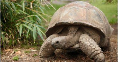 Najstarsze zwierzę lądowe na świecie ma już 187 lat!