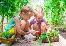 Czy powinno się uczyć dzieci, jak uprawiać żywność w ramach zajęć w szkole?