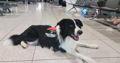 Lotnisko w Krakowie zatrudniło psa. Ma ograniczyć stres przed lataniem