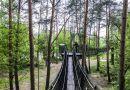 Spektakularny spacer w koronach drzew nie tylko na Słowacji … również pod Warszawą