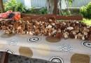 Darłowskie lasy zaroiły się od grzybów
