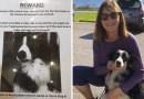 Kobieta rzuciła pracę i spędziła 57 dni na poszukiwaniach swojego psa, ostatecznie jej przyjaciel się odnalazł