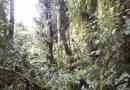 Polscy naukowcy kupili las tropikalny w Kolumbii. Chcą chronić jeden z najcenniejszych ekosystemów świata