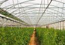 Farma fotowoltaiczna wyhodowała 17 tysięcy ton jedzenia bez ziemi, pestycydów, paliw kopalnych i wód gruntowych
