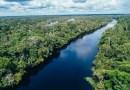 Wegańska firma kupiła 6000 hektarów lasów deszczowych Amazonii, aby je chronić