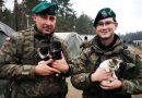 Żołnierze z Bydgoszczy w czasie ćwiczeń uratowali trzy małe koty