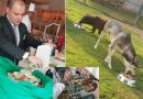 Pięciogwiazdkowy hotel w Abu Zabi wykorzystuje resztki jedzenia, żeby karmić bezpańskie psy